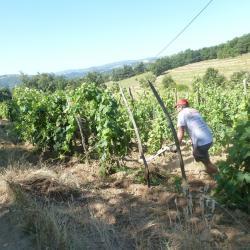décavillonnage de la vigne